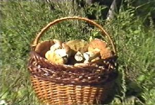 Хорошо ли Вы знаете грибы? - Грибы 1.jpg
