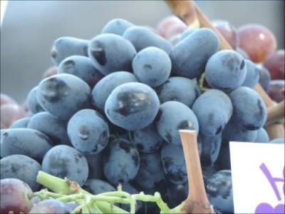 Винограда в Европе в этом году будет мало. Подорожает вино? - 9.JPG