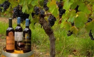 Винограда в Европе в этом году будет мало. Подорожает вино? - 10.jpg