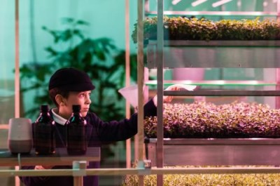 Зелень, растущая быстрее в три раза тепличной, в биоферме от IKEA - 8.jpg