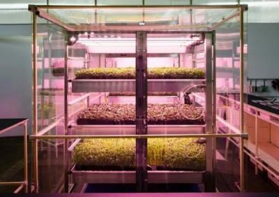 Зелень, растущая быстрее в три раза тепличной, в биоферме от IKEA - 10.jpg