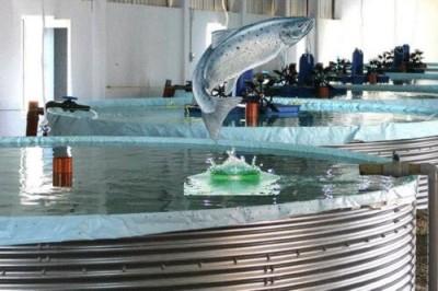 Морепродукты из высотки: вертикальные рыбные фермы Сингапура - 10.jpg