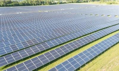 Грибы под солнечными панелями. Японский гибрид солнечной и грибной фермы - 10.jpg