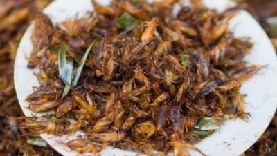 Мука из насекомых: в Финляндии производят хлеб из сверчков - 9.JPG