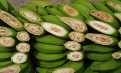 ООН прогнозирует банановую катастрофу - 1.jpg