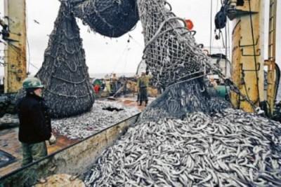 Рыбокостная мука: якутские учёные изобрели новый способ получения - 8.jpg