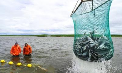 Теперь и рыбу постепенно заменят искусственными волокнами - 8.jpg