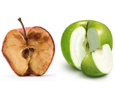 Новый сорт не темнеющих яблок выведен в Канаде - 8.jpg