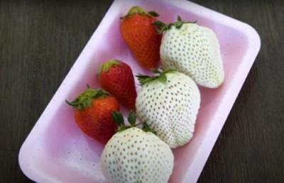 Новый вид белой клубники по десятке за ягоду - 1.jpg