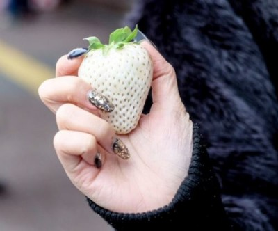 Новый вид белой клубники по десятке за ягоду - 3.jpg