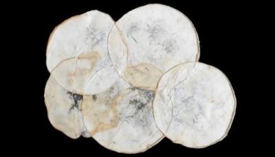 Грибы не только для еды: из мицелия грибов сделали сумку для модниц - 8.jpg