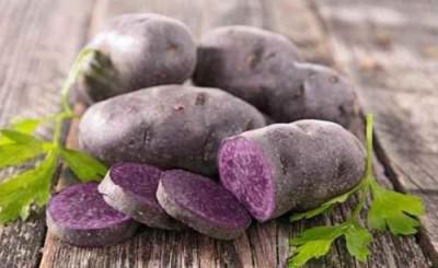 Немцы вывели черничный сорт картофеля, австралийцы втрое ускорили рост пшеницы - 10.jpg