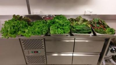 Отбракованные овощи в дело, даже если они из Антарктиды - 6.jpg