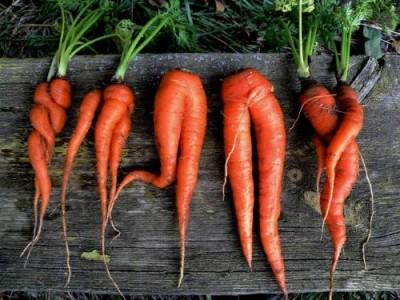 Отбракованные овощи в дело, даже если они из Антарктиды - 9.JPG