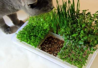 Микрозелень завоёвывает городские фермы и подоконники квартир - 6.jpg