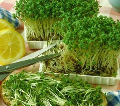 Микрозелень завоёвывает городские фермы и подоконники квартир - 9.JPG