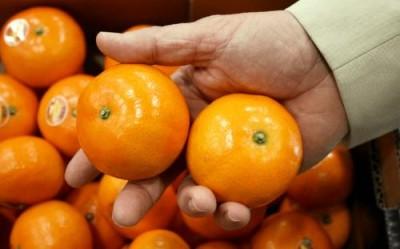 Израильтяне из ARO вывели самый вкусный в мире мандарин - 10.jpg