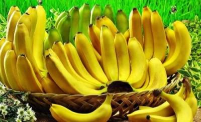 Бананы в Сибири? В Японии вывели морозоустойчивый сорт бананов - 9.JPG
