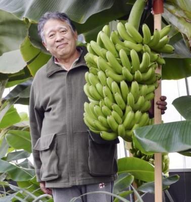 Бананы в Сибири? В Японии вывели морозоустойчивый сорт бананов - 10.jpg