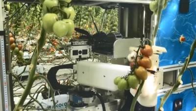 Помидоры будут собирать роботы. Правда, пока только в Японии - 10.jpg