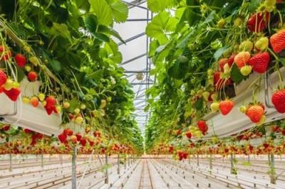 Выращивание овощей без почвы и без воды: Турин за аэропонику - 8.jpg