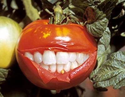 Полезные ГМО-продукты? Это вовсе не миф, это реальность  - 5.jpg
