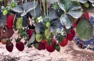 Питание растений будут обеспечивать с помощью нанотехнологий - 7.jpg