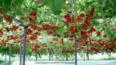 Питание растений будут обеспечивать с помощью нанотехнологий - 8.jpg
