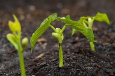 Питание растений будут обеспечивать с помощью нанотехнологий - 10.jpg