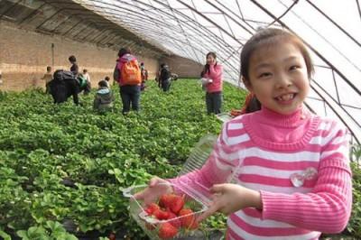 Электрическое сельское хозяйство: Китай затеял глобальный эксперимент - 7.jpg