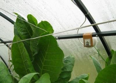 Электрическое сельское хозяйство: Китай затеял глобальный эксперимент - 8.jpg