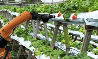 Электрическое сельское хозяйство: Китай затеял глобальный эксперимент - 10.jpg