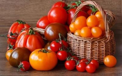 Современные томаты: на планете совсем не осталось настоящих помидоров - 10.jpg