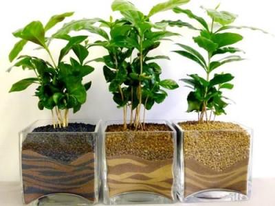 Кофе вне тропиков? Технологии выращивания канабиса сделали это возможным - 7.jpg