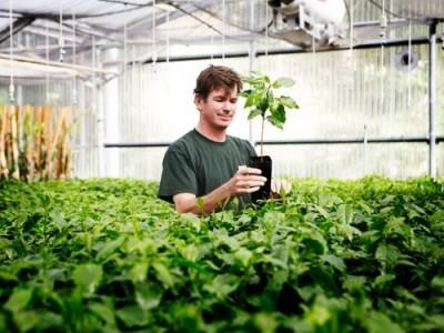 Кофе вне тропиков? Технологии выращивания канабиса сделали это возможным - 9.JPG