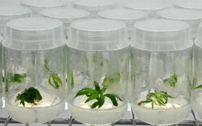 Кофе вне тропиков? Технологии выращивания канабиса сделали это возможным - 10.jpg