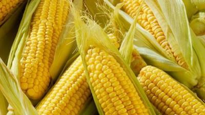 Кукурузная независимость: американская кукуруза может погубить российскую - 10.jpg