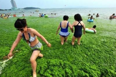 Диета на сине-зелёный водорослях: гипертоникам радоваться? - 7.jpg