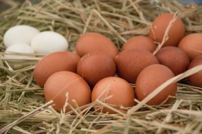 В Японии начнут продавать ГОО ГМО помидоры, яйца и другие продукты - 7.jpg