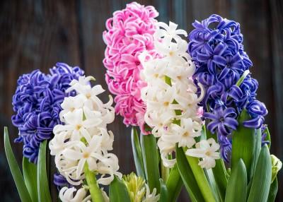 Съедобные цветы: красиво и вкусно, а ещё модно - 7.jpg