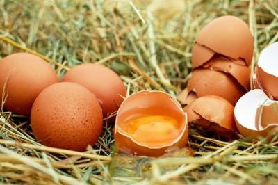 Секрет идеальной яичницы в прочном желтке. Диета для куриц, укрепляющая мембрану желтка - 10.jpg