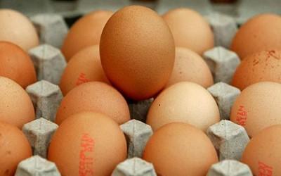 А вы знаете, откуда берется молоко и яйца? - eggs_1513545a.jpg