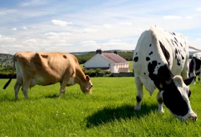 А вы знаете, откуда берется молоко и яйца? - farm.jpg