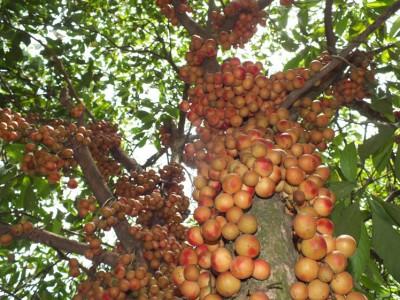 Экзотические овощи и фрукты - 32_2_unusual-fruits-14.jpg