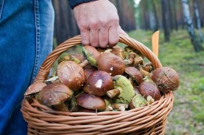 Причины отравлений грибами: меры предосторожности - 7.jpeg