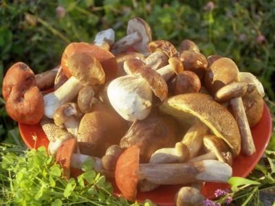 Причины отравлений грибами: меры предосторожности - 9.jpeg
