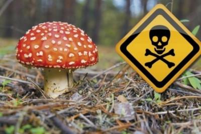 Причины отравлений грибами: меры предосторожности - 6.jpeg