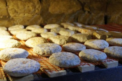 Запах сыра – это способ общения микробов с грибами и еда для бактерий - 10.jpeg