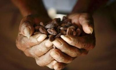 В древности из шоколада готовили не только напитки - cocoa.jpg