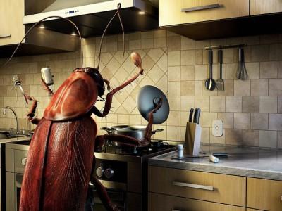 Борьба с тараканами: как их вывести с кухни? - tarakan_na_kuhnye.jpg